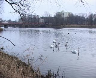 начались работы по очистке городского озера Советска
