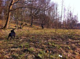 В Советске существует официально определенное место для выгула собак