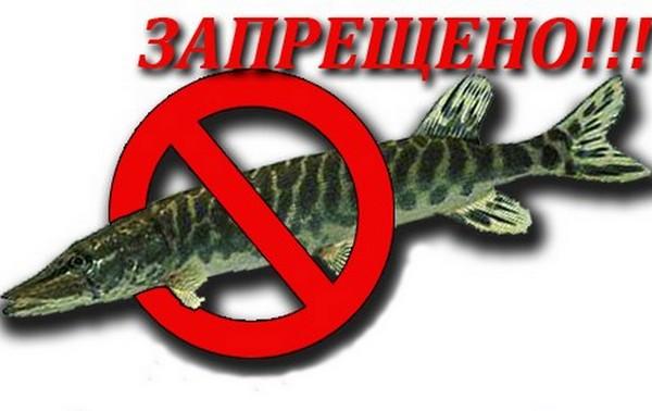 можно ли ловить рыбу запреты